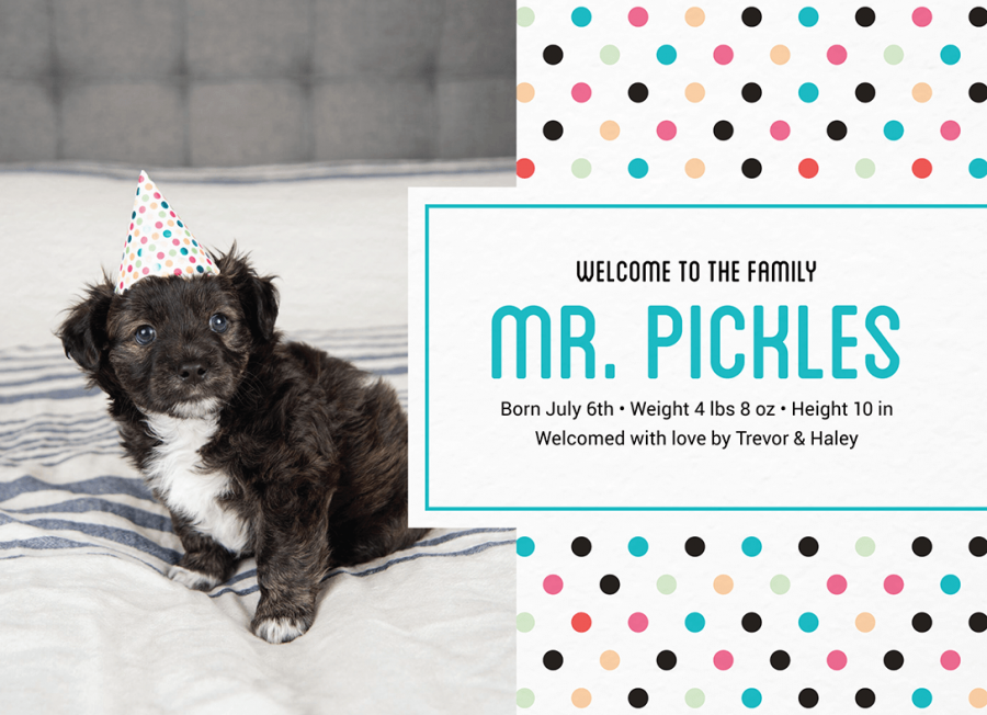 Polka Dot Pet Announcement