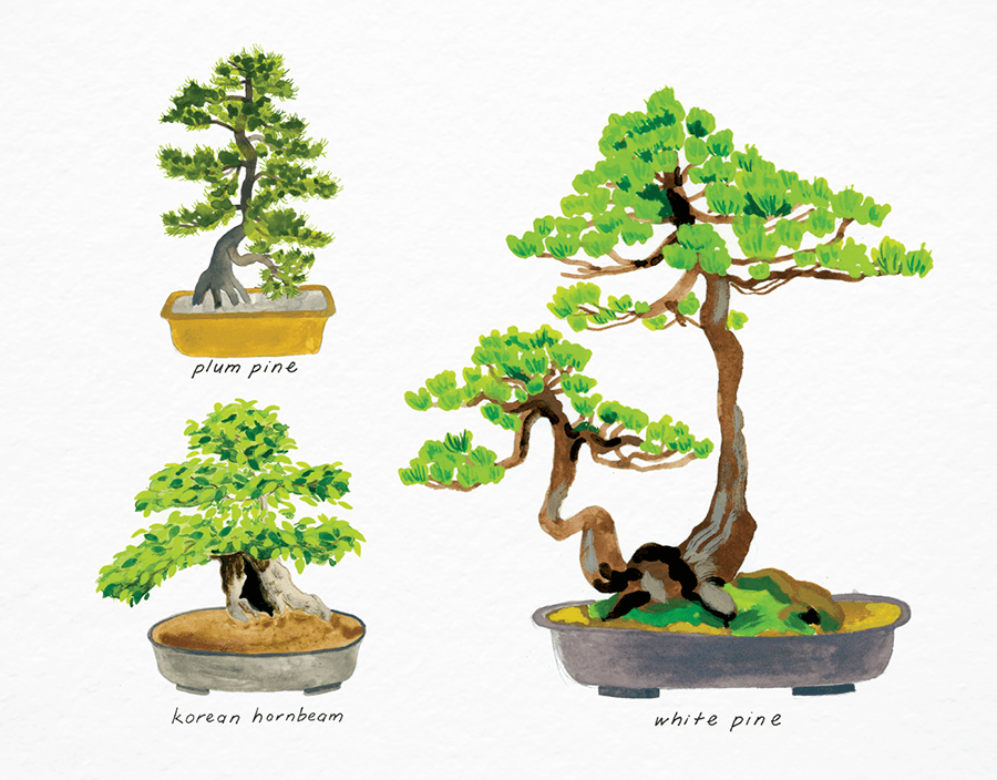 Cute Bonsai