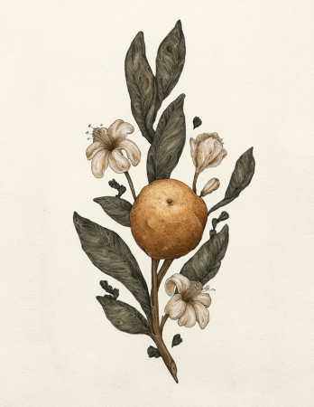 Sweet Clementine