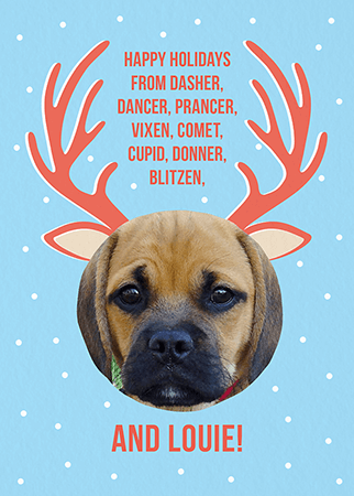 custom reindeer pet holiday card - Pet Holiday Cards