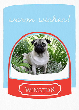 quirky winter pet holiday card - Pet Holiday Cards