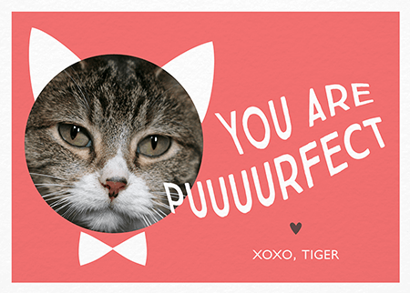 Cute Punny Valentine Photo Card