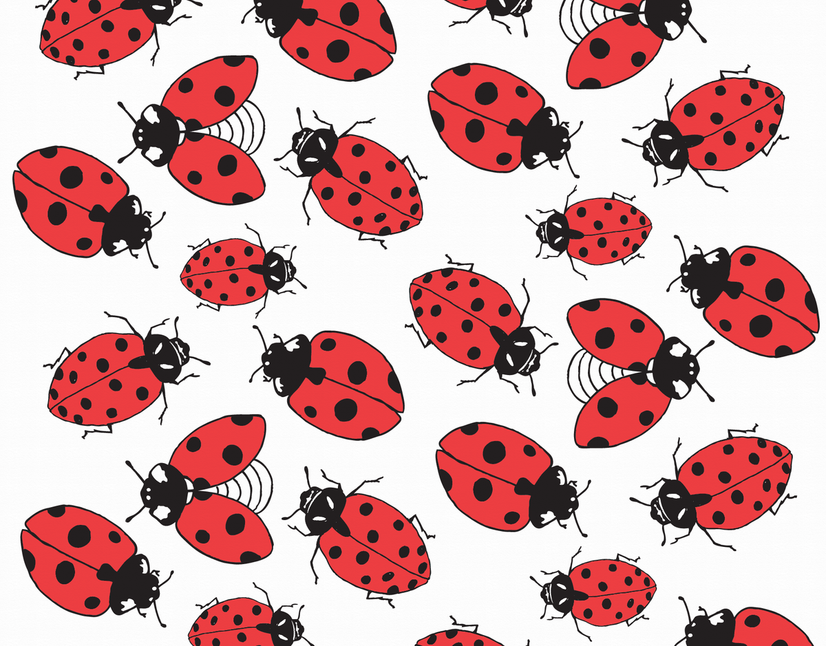 Lady Bug Pattern