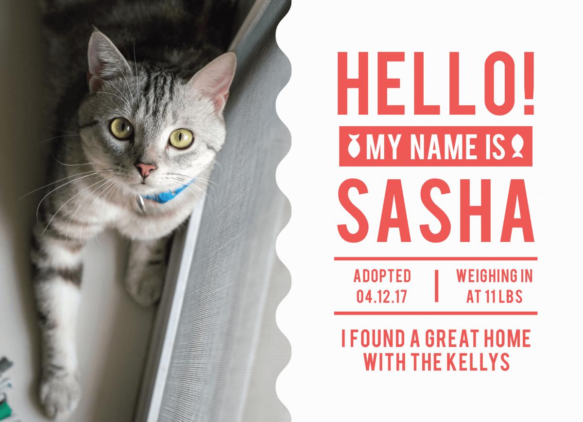 Hello Kitten Announcement