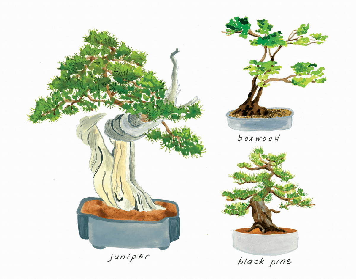 Lovely Bonsai
