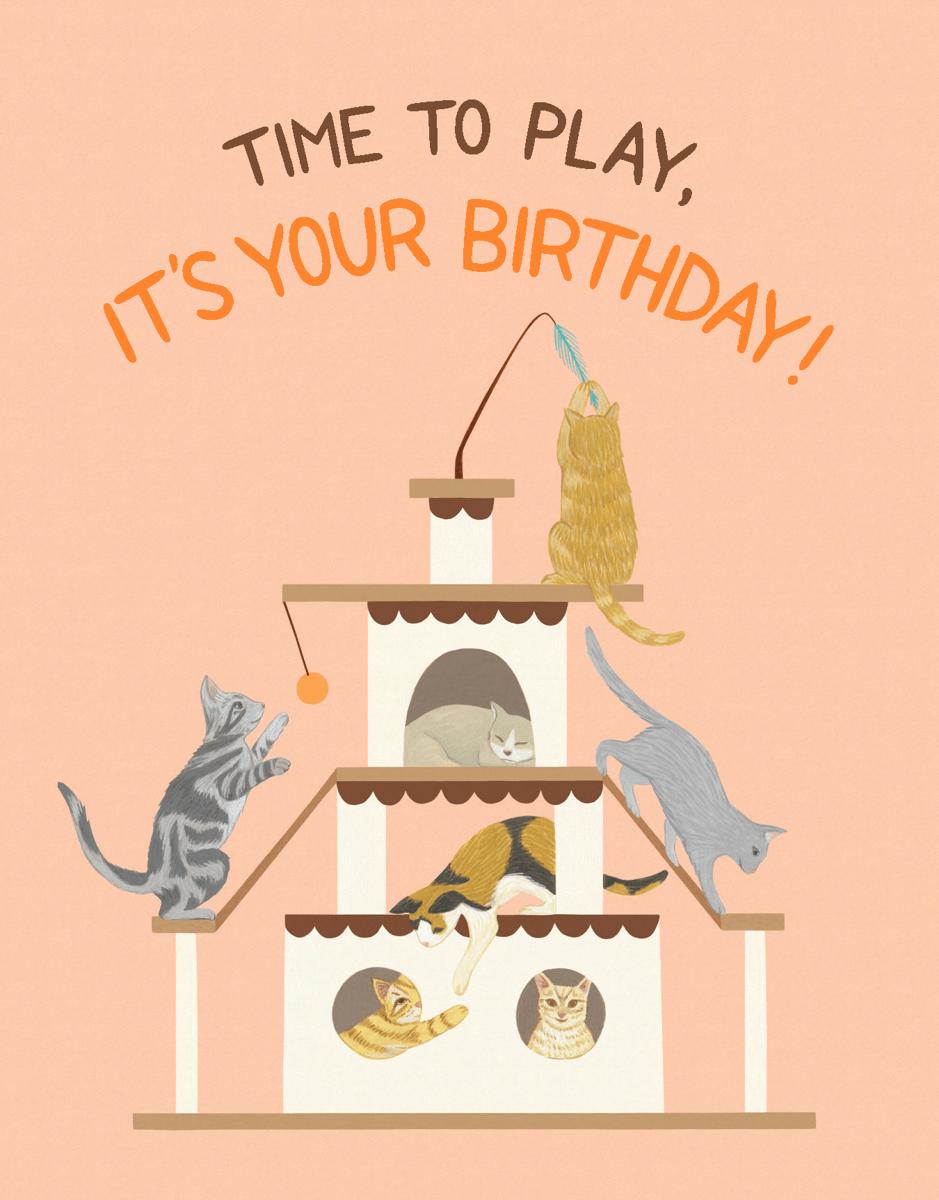 Playful Cats