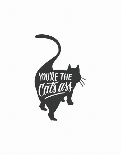 Cat's Ass