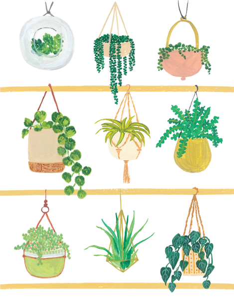 Hanging Plants