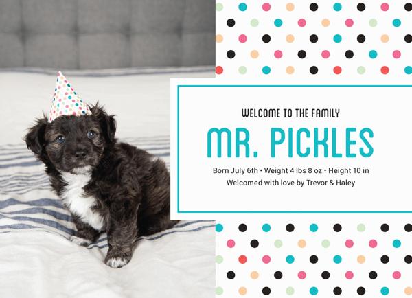 Polka Dot Pet Announcement