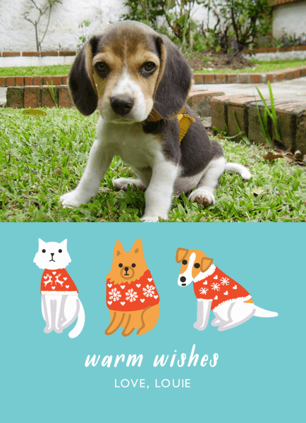 Sweater Pets Custom Photo Holiday Card