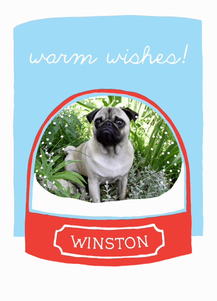 Quirky Winter Pet Holiday Card