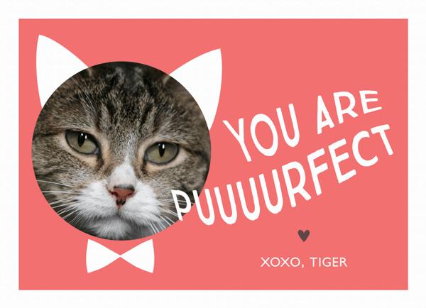 Cute Punny Valentine Photo Card