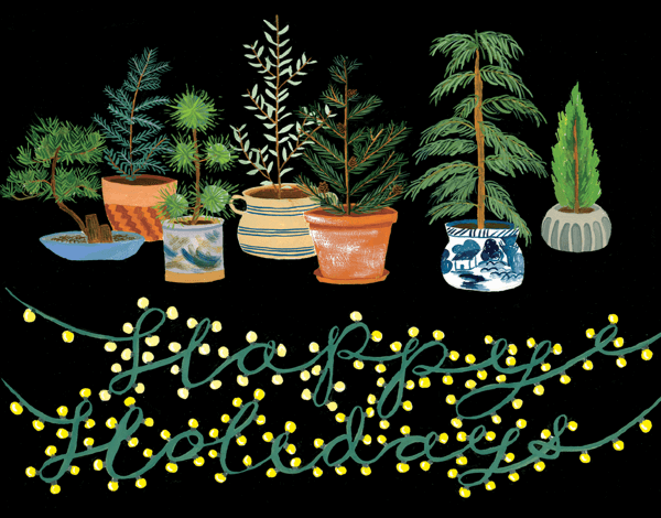Potted Evergreens