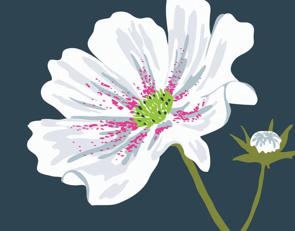 White Cosmos Flower Card