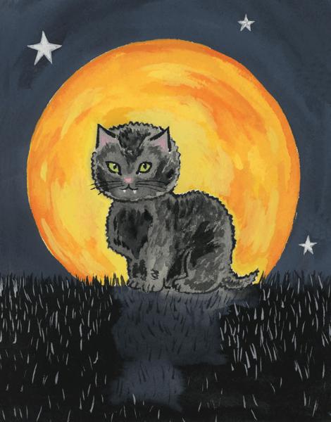Shy Black Cat