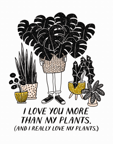 More Than My Plants