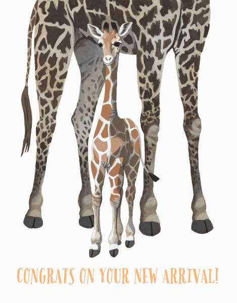 Giraffe New Arrival