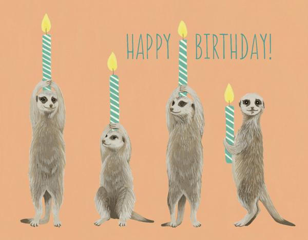 Meerkat Birthday